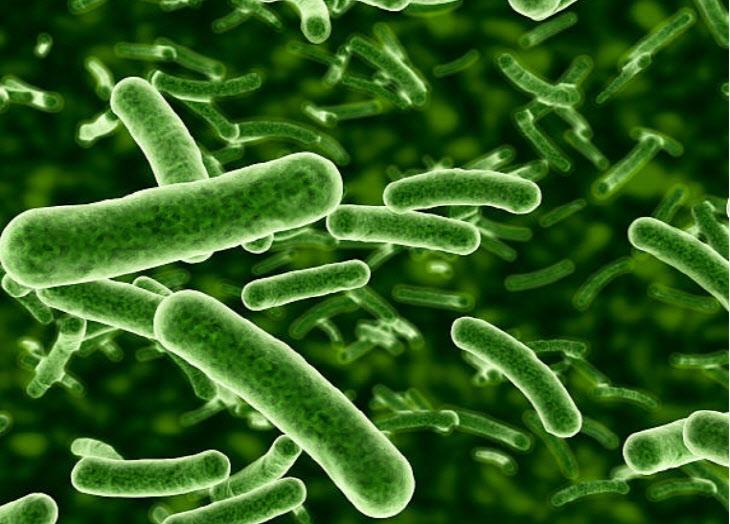 세균 이미지