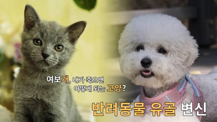 [브릿지영상] ``여보개 내가 죽으면 어떻게 되는고양?``…반려동물 유골 변신