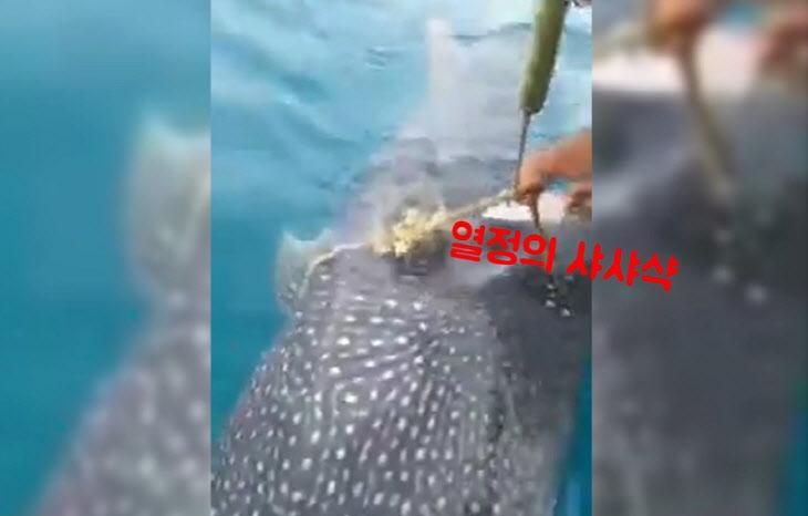 [SNS `픽` 영상] 밧줄 풀어준 사람들에게 `고맙다` 인사하는 고래상어