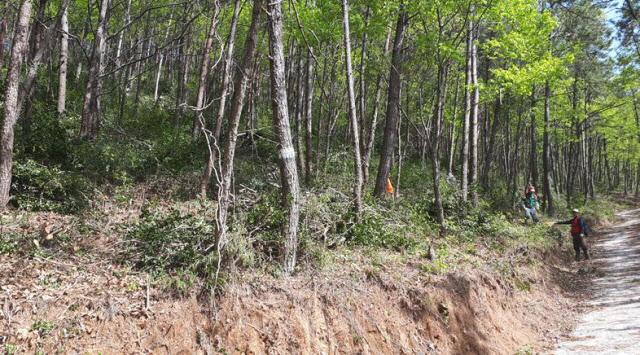 남해군, 임야 530ha 대상 숲 가꾸기 사업 추진